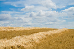 Yellow windrows Royalty Free Stock Images