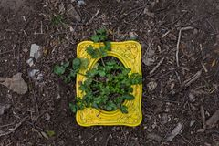Yellow frame with weed growing through it. Yellow wood frame with weeds growing through it in on dirt ground royalty free stock photo