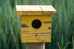 Yellow wooden bird house in long grass at Babylonstoren Wine Estate, South Africa. Yellow wooden bird house in long grass at Babylonstoren Wine Estate royalty free stock images