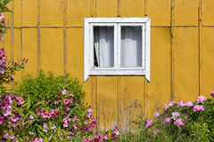 Yellow wall, pink flower Stock Image