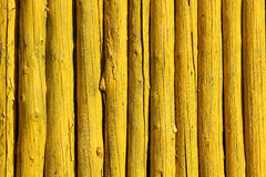 yellow woods Royalty Free Stock Photography