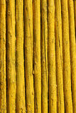 Yellow woods Stock Images
