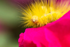 Yellow worm Royalty Free Stock Photography