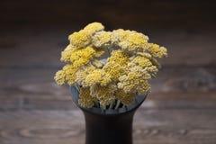 Yellow Yarrow in black vase on wooden background. Bouquet of Yellow flower in dark vase. stock photo