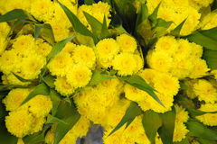 Yellow, yellow flowers Royalty Free Stock Image
