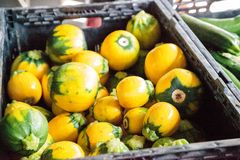 Yellow zucchini also called summer squash. Sold at a farmers market Stock Images