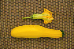 Yellow zucchini with courgette fresh flower Royalty Free Stock Photography