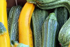 Yellow Zucchini and Green Zucchini. Yellow and green zucchini on display at a local grower's market Stock Images