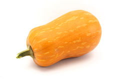 Yellow zucchini squash Royalty Free Stock Photography