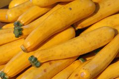Yellow Zucchini Squash Stock Images