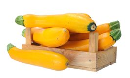 Yellow zucchini Royalty Free Stock Photos