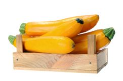 Yellow zucchini Royalty Free Stock Images