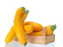 Yellow zucchini Stock Photography
