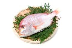 Yellowback海鲷 库存照片