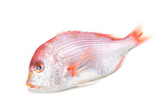 Yellowback seabream. Cooking ingredient series yellowback seabream. available for clipping work stock photography