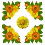 YellowBlossomsNapkinWhite1 Royalty-vrije Stock Afbeeldingen