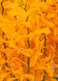 Yellowe świeżego kwiatu Storczykowy tło Zdjęcie Royalty Free