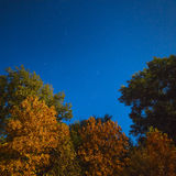 Yellowed autumn forest in the night starry sky. Photographed at Stock Images