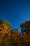 Yellowed autumn forest in the night starry sky. Photographed at Royalty Free Stock Photos