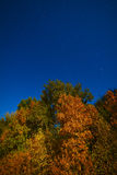 Yellowed autumn forest in the night starry sky. Photographed at Royalty Free Stock Photo