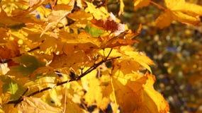 Yellowed gałązki Jesieni gałąź drzewa Elementy las Obrazy Stock