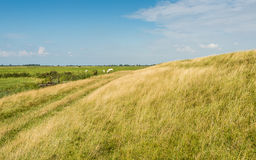 Yellowed gras at a dike in summertime Stock Photo