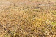 Yellowed grass, autumn Stock Photo