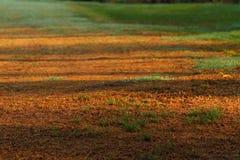 Yellowed green grass Stock Image