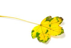 Yellowed leaf Royalty Free Stock Photography