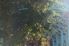 Yellowed leaves on iron arches stock photography