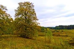 Yellowed lipowy na stromym skłonie Obraz Stock