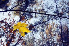 Yellowed maple leaf. On sky background Royalty Free Stock Photos