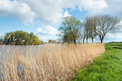 Yellowed reeds along the water. Of a small lake. Spring has begun, the grass is bright green and some trees are budding already Royalty Free Stock Photography