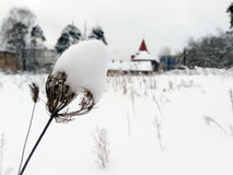 Yellowed rośliny pod śniegiem Zdjęcie Stock