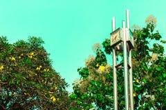 Yellower Bougainvillea και στο δημιουργικό σύνολο σύστασης και ρολογιών Στοκ Εικόνες