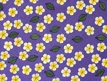 Yellower e flor branca no papel roxo da amoreira Fotografia de Stock