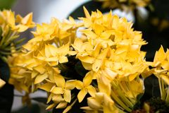 Yellower spike floweron blackground. Front view from the top, technical cost-up Stock Photos