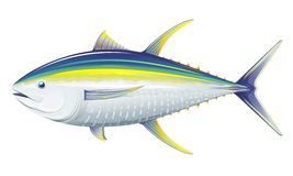 Yellowfin tuna. Realistic sea fish illustration on white background Royalty Free Stock Image