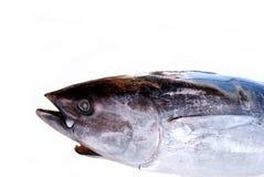 Yellowfin tuna .... Yellow fin tuna isolated on white Royalty Free Stock Photo