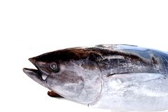 Yellowfin tuna ..... Yellow fin tuna isolated on white Royalty Free Stock Photo