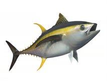 Yellowfintonfisk som isoleras Arkivbilder