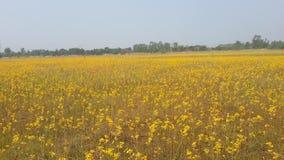 Yellowflower Στοκ Εικόνες