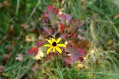 Yellowflower Fotografie Stock