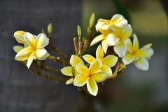 Yellowflower o flor amarilla Fotos de archivo libres de regalías