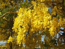 Yellowing flowers. Yellowish Flowers bunch royalty free stock images
