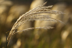 Yellowing grass Stock Image