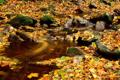 Yellowing leaves trickling stream Royalty Free Stock Photo