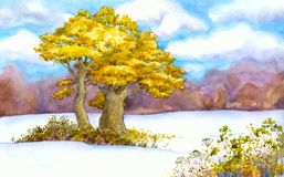 Yellowing oaks in a snowy field Royalty Free Stock Image