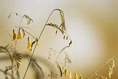 Yellowing stems royalty free stock photography