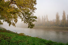 Yellowing tree in fog by the river. Yellowing tree on the green banks of the river in a fog Stock Photography